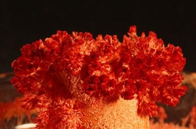 Серия Лучшие эксперименты Вырасти огненного пушистика - фото 11107