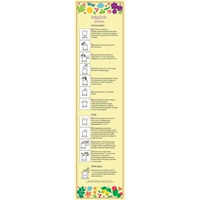 Горшок Буддлея Давида набор для выращивания - фото 12727