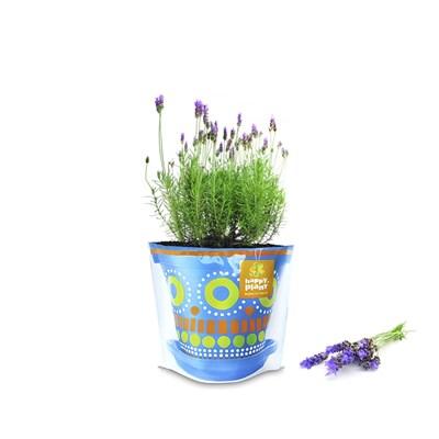 Лаванда ароматная набор для выращивания - фото 12903