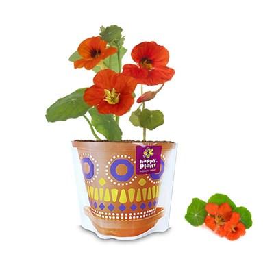 Подарочный набор для выращивания Настурция очаровательная - фото 13018