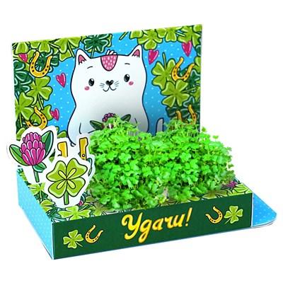 Подарочный набор Живая открытка Удачи - фото 13533