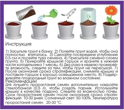 Набор для выращивания Аквилегия - фото 13895