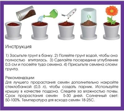 Набор для выращивания Базилик - фото 13928