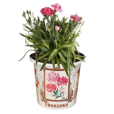 Набор для выращивания Гвоздика - фото 14117