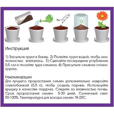 Набор для выращивания Гвоздика - фото 14820