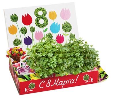 Подарочный набор 8 марта Тюльпаны - фото 16849