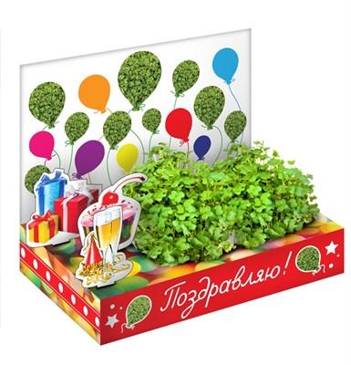 Подарочный набор Живая открытка Поздравляю - фото 16860