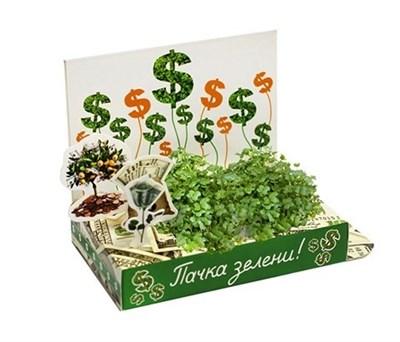 Подарочный набор Живая открытка Вырасти зелень - фото 6179