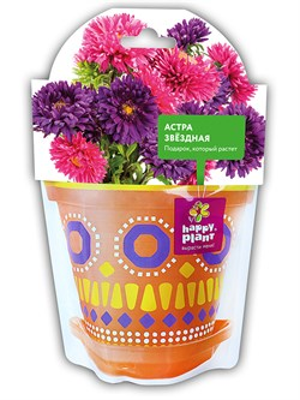 Астра звездная набор для выращивания Happy Plant - фото 8025