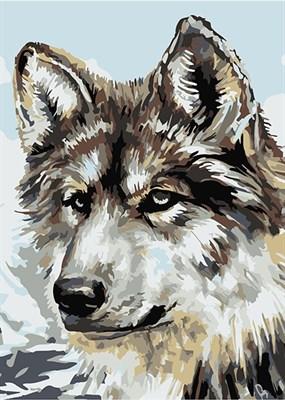 Раскраска по номерам Серый волк - фото 8603
