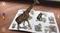3D Живые наклейки Африка и Сибирь - фото 8099